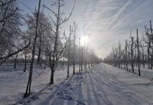 Powrotu wielkiej zimy z mrozami nie widać do końca stycznia, a nawet i dalej