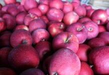 Jabłek w Belgii coraz mniej, ale sprzedaż wyhamowała