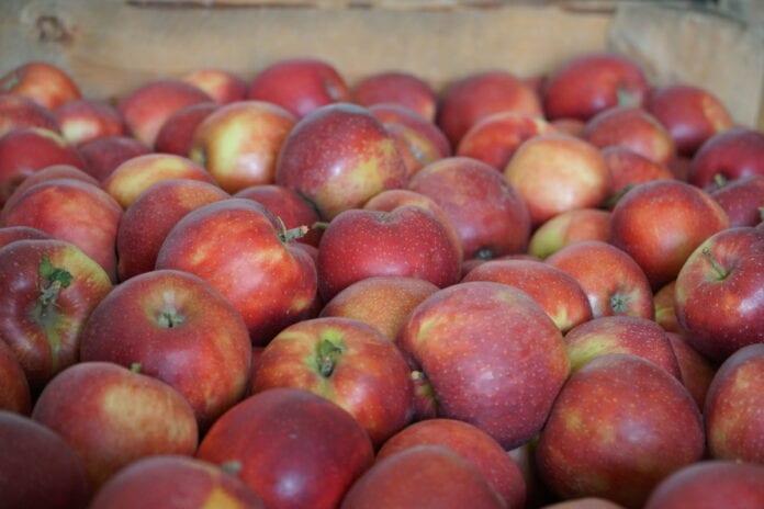 wielkie jabłka
