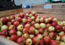 Idared jabłka