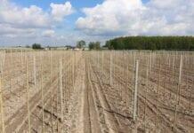 Jak obsadzić hektar sadu za darmo?