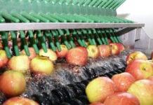 Raport z sortowania jabłek bez niespodzianek – Spotkanie On-line pon. 15.02.2021 godzina 19.00