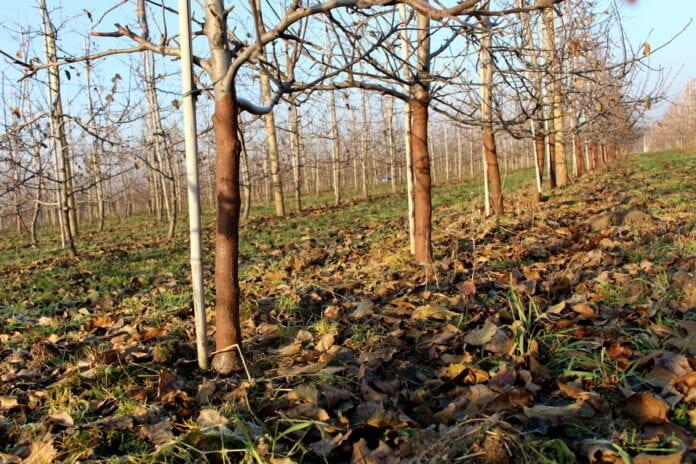 gleba w sadach