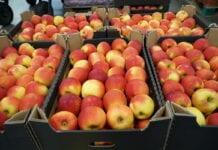 cennik jablek na sortowaanie