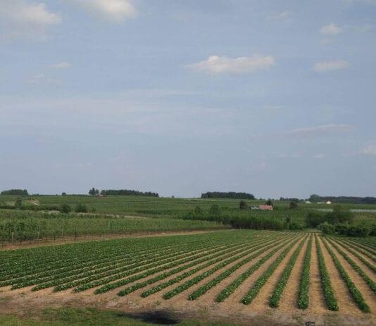 Ile za hektar po otwarciu rynku gruntów rolnych na Ukrainie?