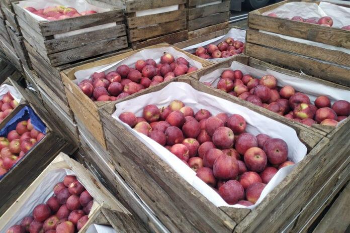 jabłka na hurcie