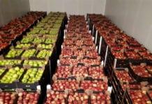 jabłka na eksport
