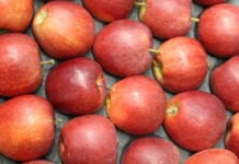jabłka z południowej półkuli