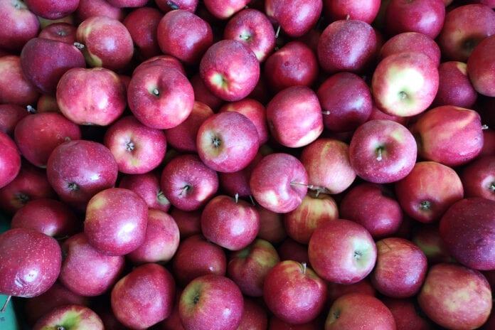 jakość jabłek