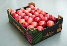 moldova fruct marka jabłek