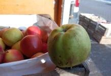 Mróz na rynkach hurtowych dokucza sadownikom i jabłkom