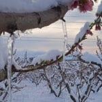 sad w śniegu