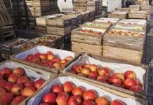 jabłka w skrzynkach