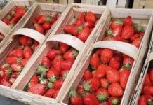Podsumowanie zbiorów truskawek i wiśni w 2020 roku