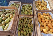 gruszki z Belgii