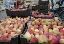 Produkcja owoców w UE. Jesteśmy na 3 miejscu