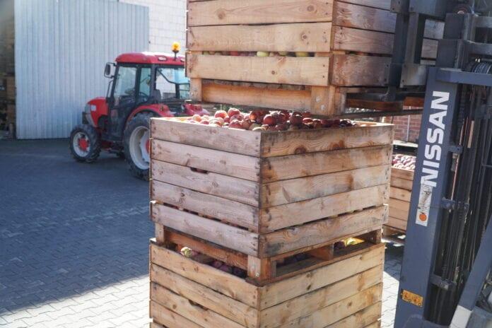 jablka po gradzie
