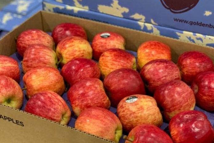 jabłka pogradowe