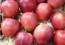 eksport jabłek do indii