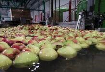 Cennik jabłek na sortowanie – 8 marca 2021