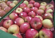 jabłka w markecie