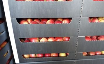 jablka na eksport
