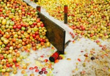 jabłka na sok