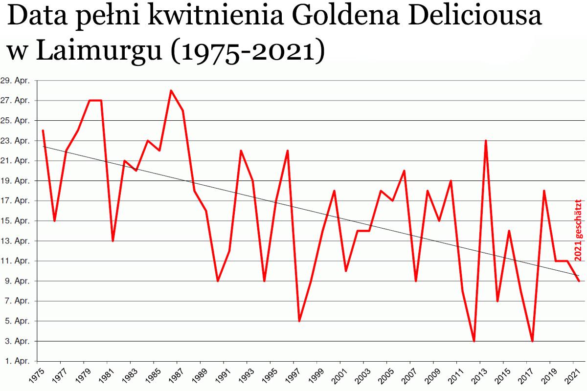 wykres kwitnienia Goldena