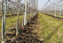 Prawdy i mity o nawożeniu sadów wiosną już dziś!