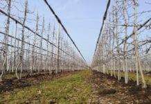 Prawdy i mity o nawożeniu sadów wiosną – spotkanie on-line!