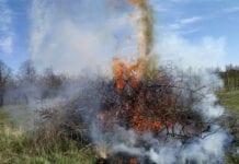 ognisko w sadzie
