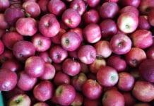 Kupię Red Jonaprinca – drożej nie zawsze znaczy dla sadownika lepiej