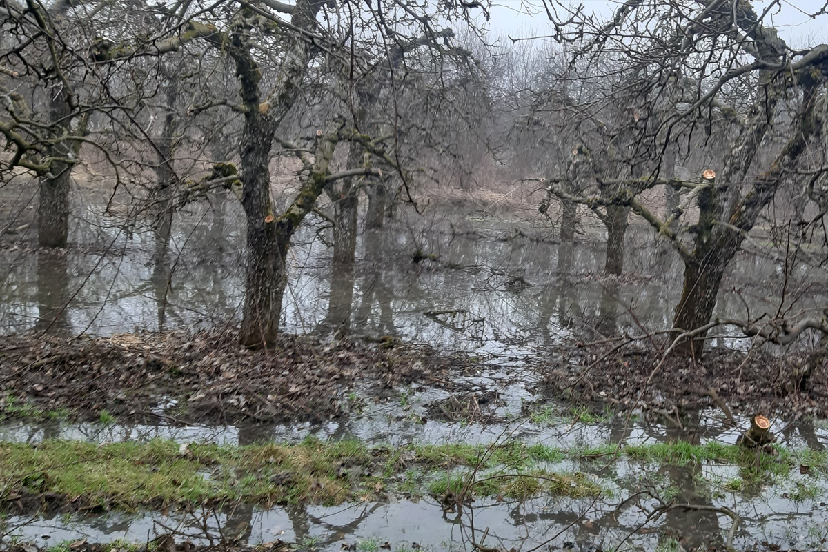 woda w drzewkach