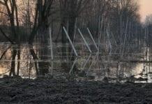 zatopione drzewka