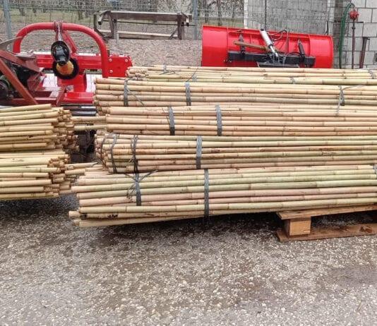 Dostępność tyczek bambusowych będzie zwiększać się sukcesywnie