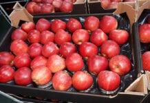 jabłka w kartonie