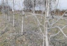 Glinka kaolinowa – niezastąpiona w dezorientacji miodówki