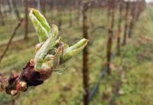 DORADCY FRUITAKADEMIA: Otwarcie sezonu ochrony sadów [Video]