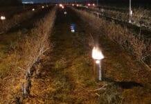 Piecyki sadownicze w borówce skutecznie ochroniły plantację [Zdjęcia]