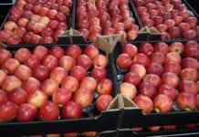jabłka eksport