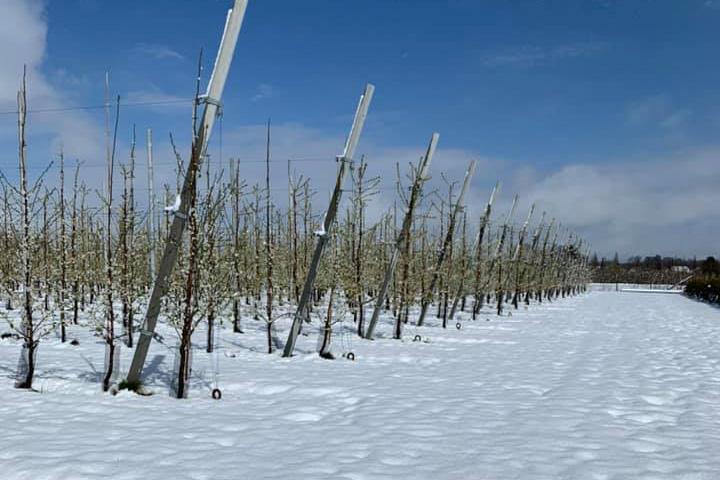 śnieg w Belgii