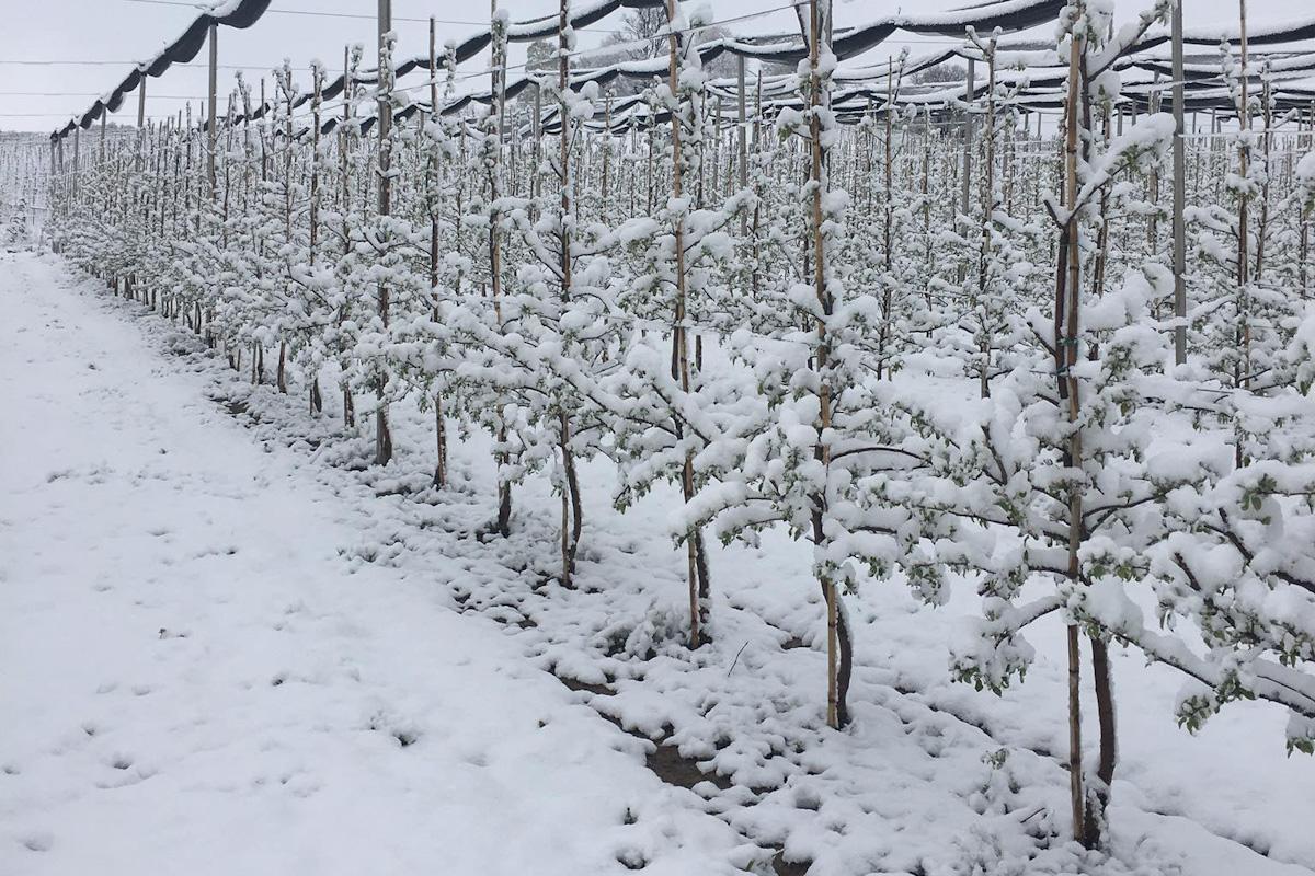 opady sniegu