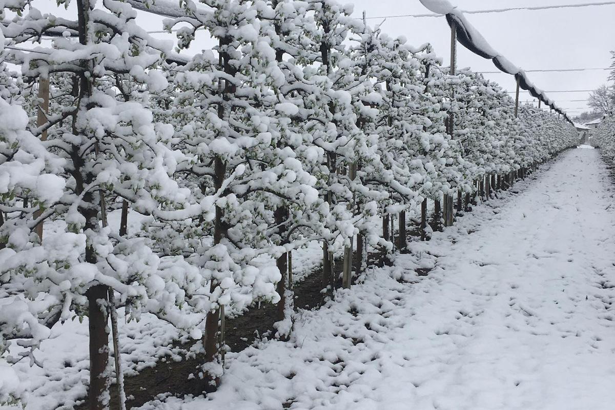 zima w sadzie