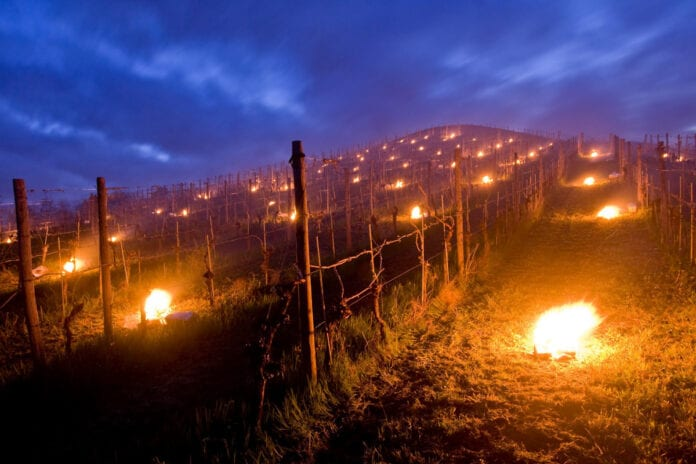 świece w winnicy