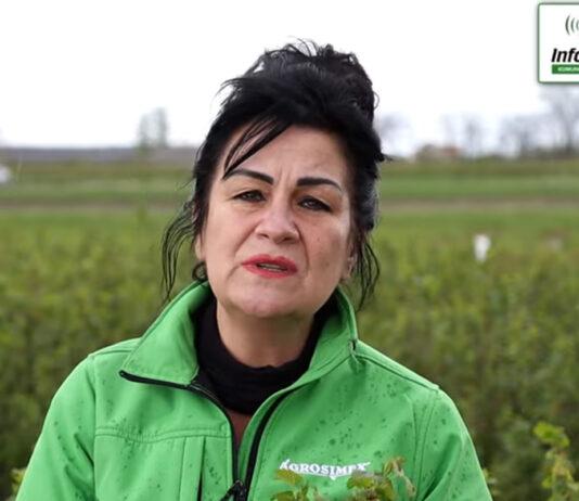 Zalecenia ochrony na plantacji porzeczek – komunikat jagodowy Agrosimex, 07.05.2021