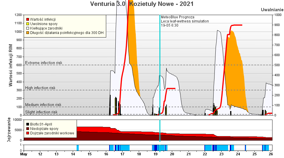 Wykres. 1 – Symulacja rozwoju parcha jabłoni dla lokalizacji Kozietuły Nowe (gm. Mogielnica) – intensywne opady deszczu w dniach 16-17 maj doprowadziły do wystąpienia infekcji w skali ekstremalnie silnej. Opady w kolejnych dniach ponownie doprowadziły do wysiewu zarodników workowych – to pokazuje z jak dużym zagrożeniem musimy się obecnie mierzyć.