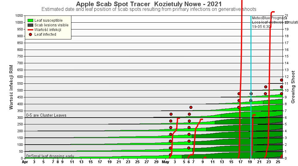 Wykres. 3 – Poniższa grafika pokazuje, które liście mogły zostać zainfekowane w czasie wystąpienia danej infekcji parcha jabłoni. Widoczne czerwone kropki przy czerwonych pionowych kreskach wskazują, na których liściach powinniśmy szukać objawów parcha. Widoczne obecnie plamy na liściach rozetowych oraz pierwszych liściach z nowych przyrostów są efektem pierwszo-majowych infekcji.