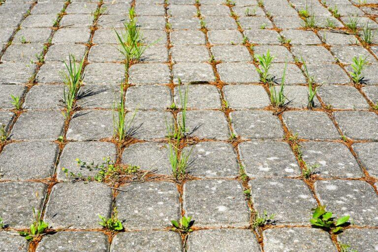 Zrezygnuj z glifosatu w swoim ogrodzie. Wypróbuj naturalny zamiennik
