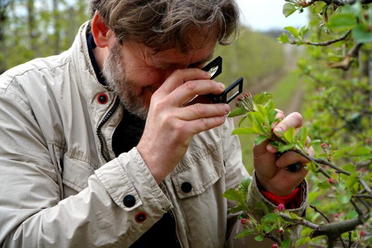 Zwalczanie mszyc w fazie różowego pąka, dr Michał Pniak, Biocont