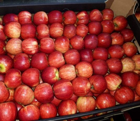 Sadownik sprzedaje dziś jabłka średnio 49% taniej niż rok temu